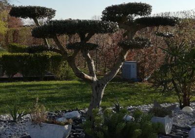 Taille d'arbustes Mâcon